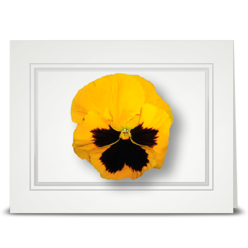 Pansy, yellow - folded card