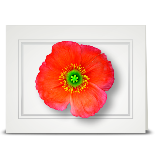 Poppy, topview - folded card