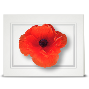 Poppy, orange - folded card
