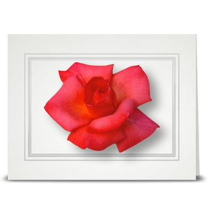Rose, new pink - folded card