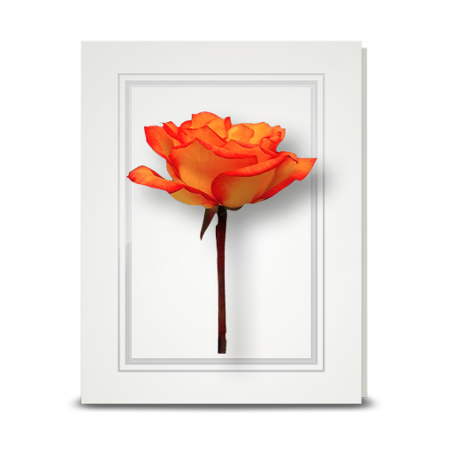 Rose, orange - folded card