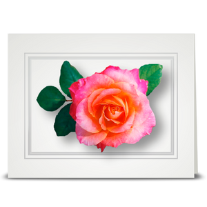 Rose, peach to pink - folded card