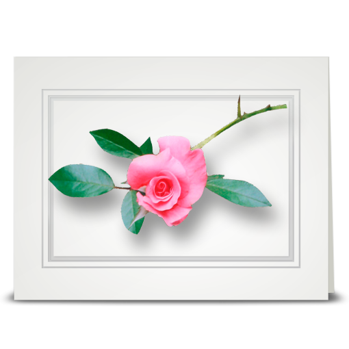 Rose, Vining Pink - folded card