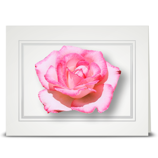 Rose, pink - folded card
