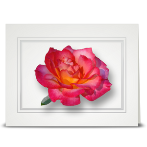 Rose, Peach Unity - folded card