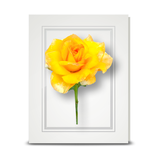 Rose, Yellow - folded card