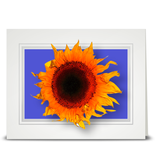 Sunflower, blowing - folded card