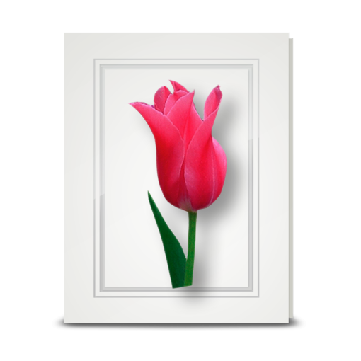 Tulip, Deep Pink - folded card