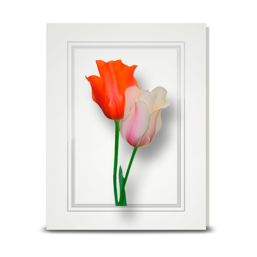 Tulips - folded card