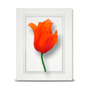 Tulip, Orange - folded card