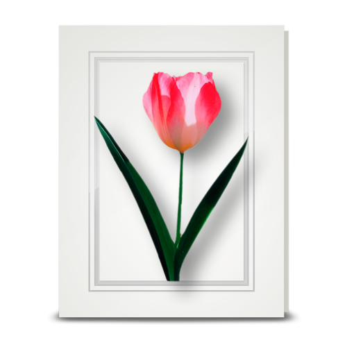 Tulip, pink - folded card