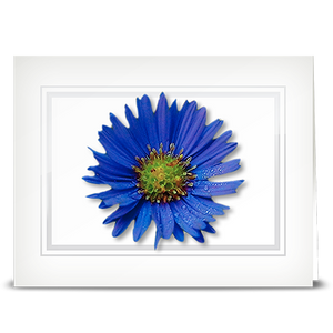 Aster, blue - folded card