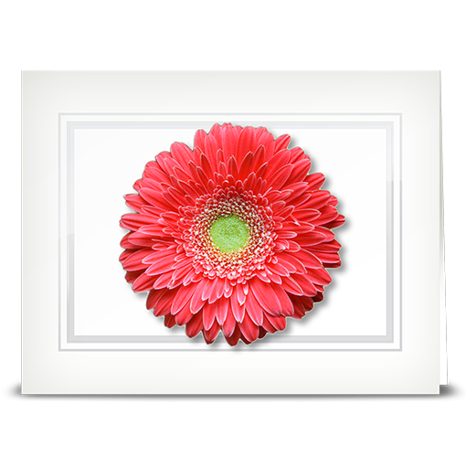 Gerbera, salmon - folded card
