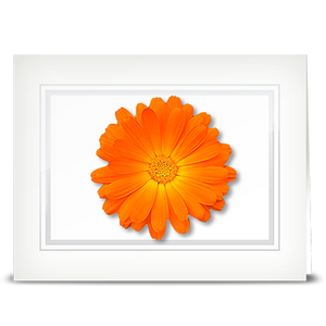 Daisy, Orange - folded card