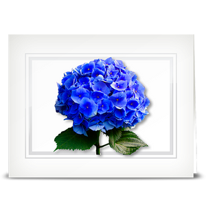 Hydrangea, blue - folded card