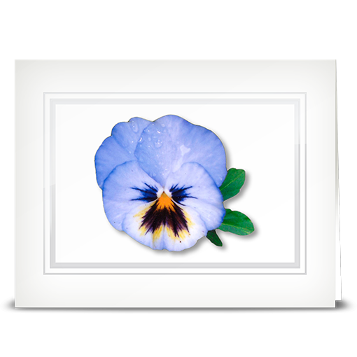 Pansy, light blue - folded card