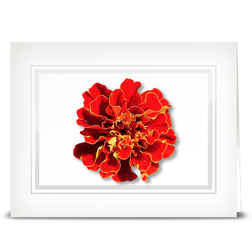 Mum, marigold - folded card