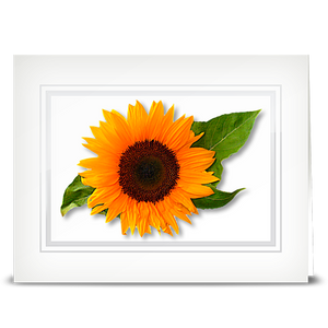 Sunflower, swiss - folded card