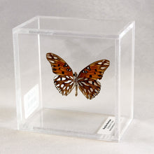 Load image into Gallery viewer, Gulf Fritillary 4 x 4 Acrylic Display
