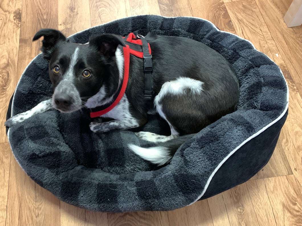 Dog Bed - Large Oval Dog bed in Black with removable Cushion - COLLECTION ONLY