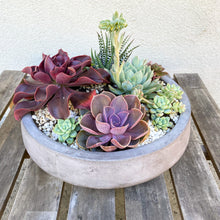 Load image into Gallery viewer, The Succulent Garden