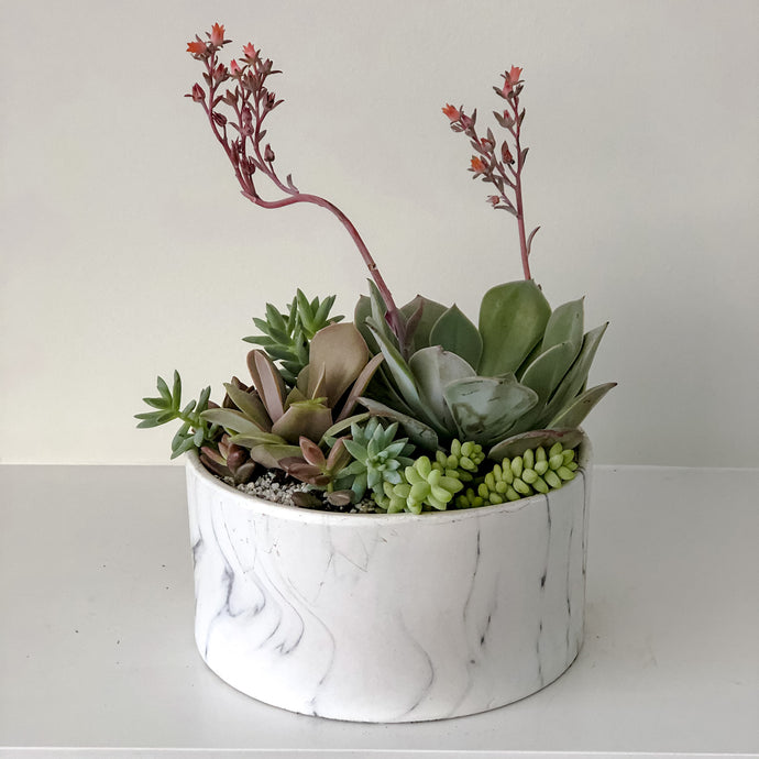 succulents in marble planter for delivery