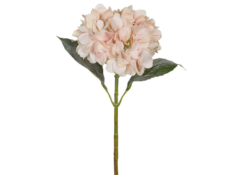 67Cmh Antique Blush Hydrangea.