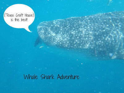 Whale Shark Adventure in Cancun Mexico