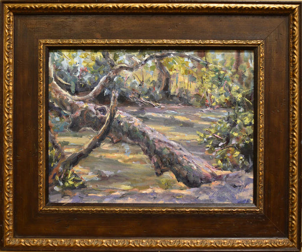 "Painting: Sycamore Tango Artist: Thomas A. Himsel Medium: Oil on Linen Size: 19 x 23"", framed"