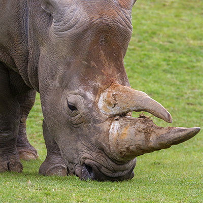 Meet the Rhino Experience Voucher (Africa Alive)