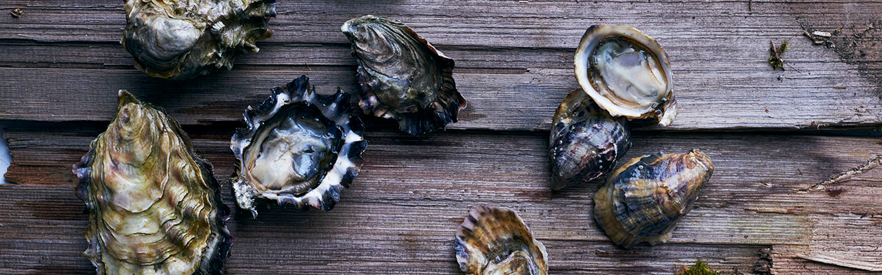 hama hama oysters photographed by David Malosh