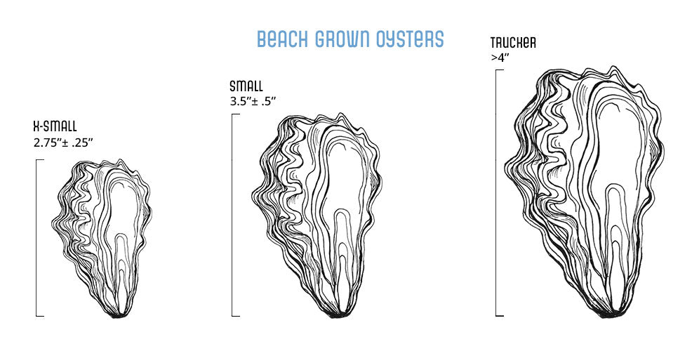 Oyster Sizes