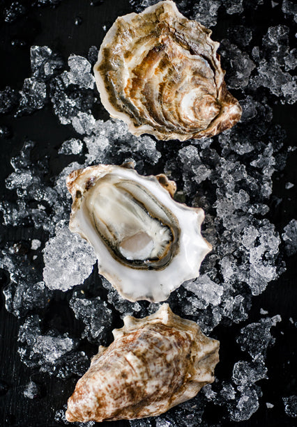 Sea Cow Oysters