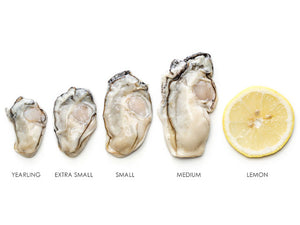 Shucked Oysters: Half Gallon