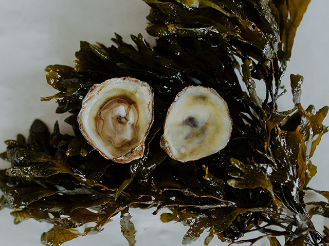 Olympia Oysters (1 dz)