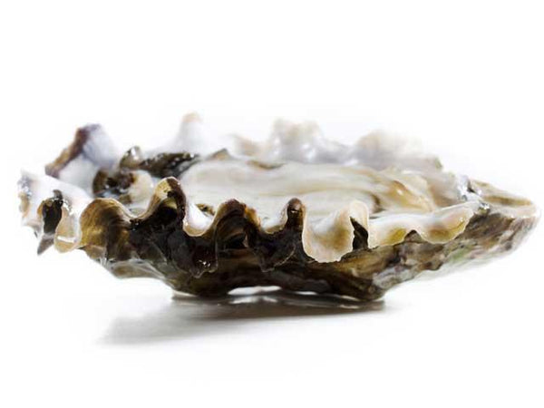 Oysters - Hama Hama® Oysters