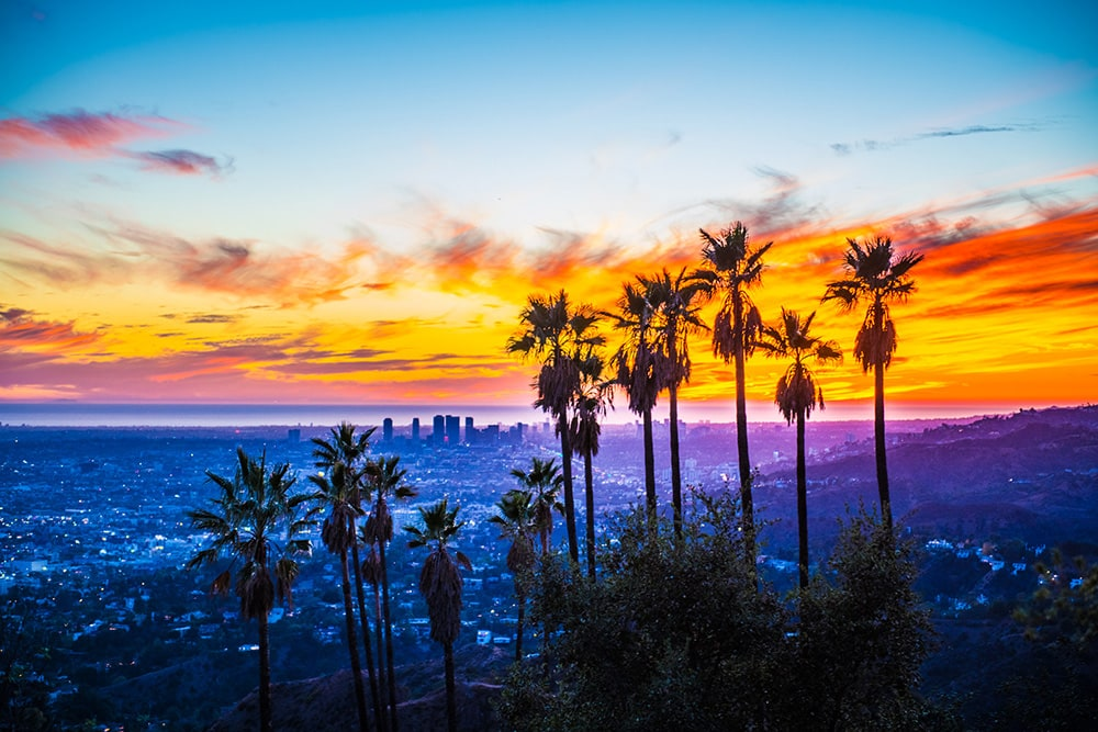 Hollywood palms at sunset