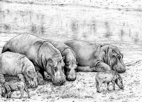 hippos - by Ashley Habernal (The Dotted Wild)