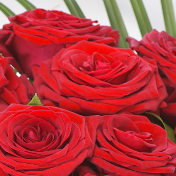 Two Dozen Red Roses | 24 Red Roses Bouquet