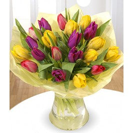 Top Mixed Tulips