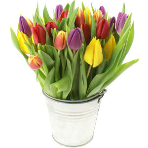 Spring Tulips in Zinc Pot