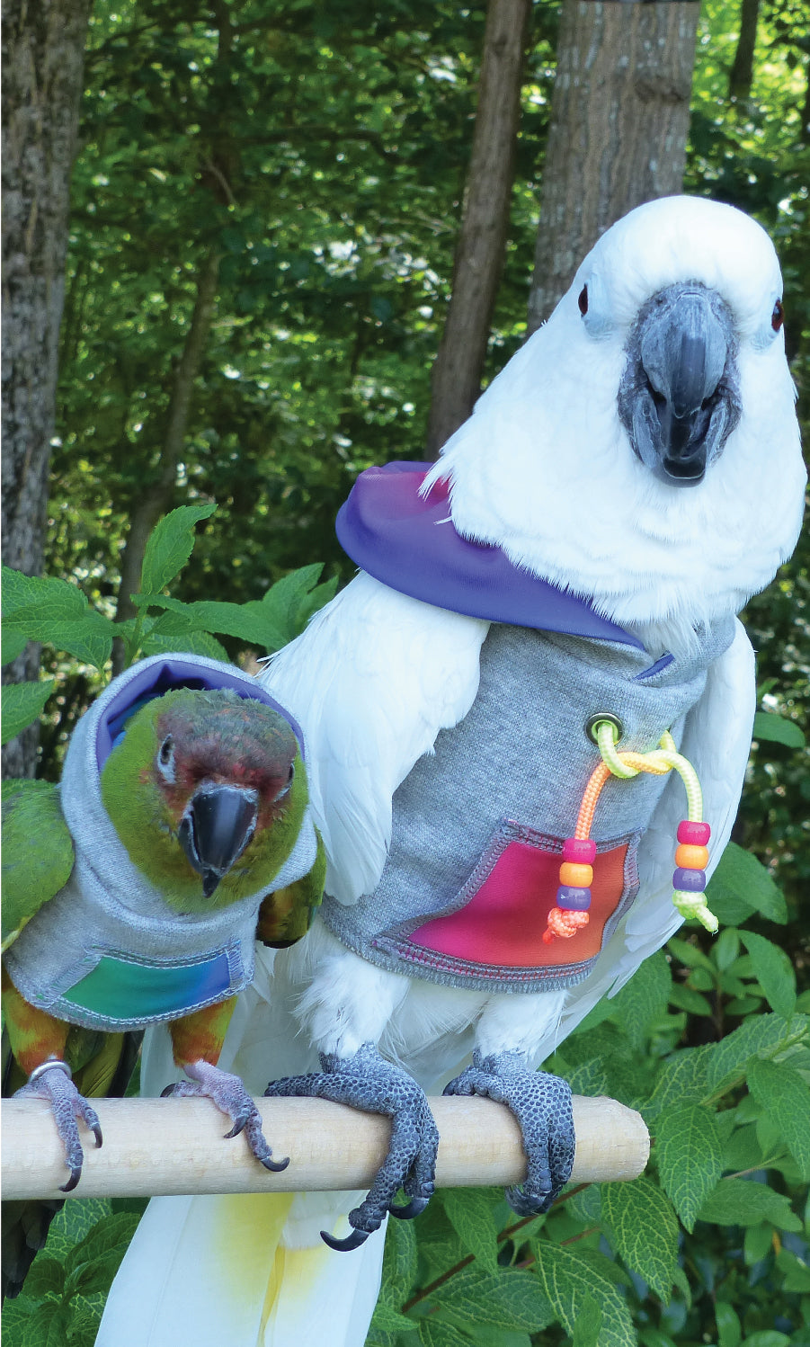 Keeping Your Birds Safe