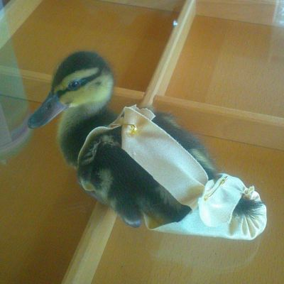 Baby Duck Harness
