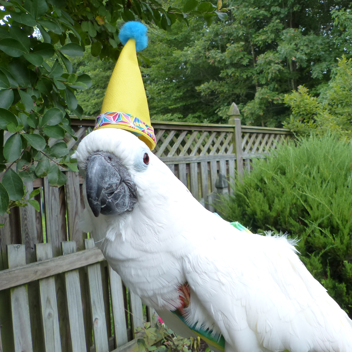 Happy BirdDay Hat