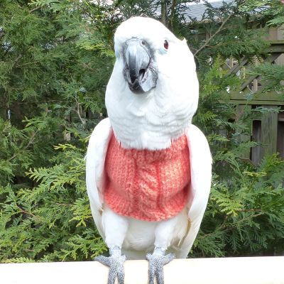 CableKnit FeatherSweater