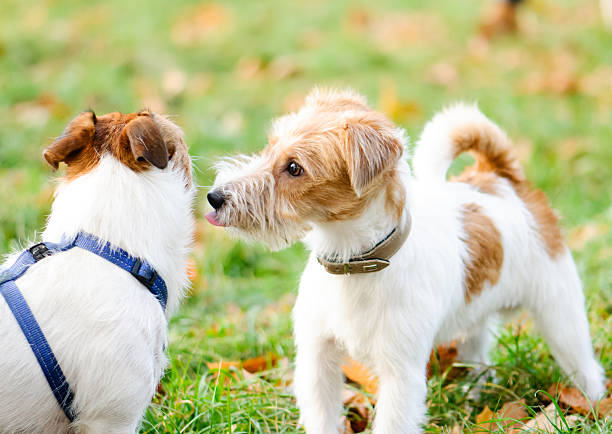 why do dogs lick each other