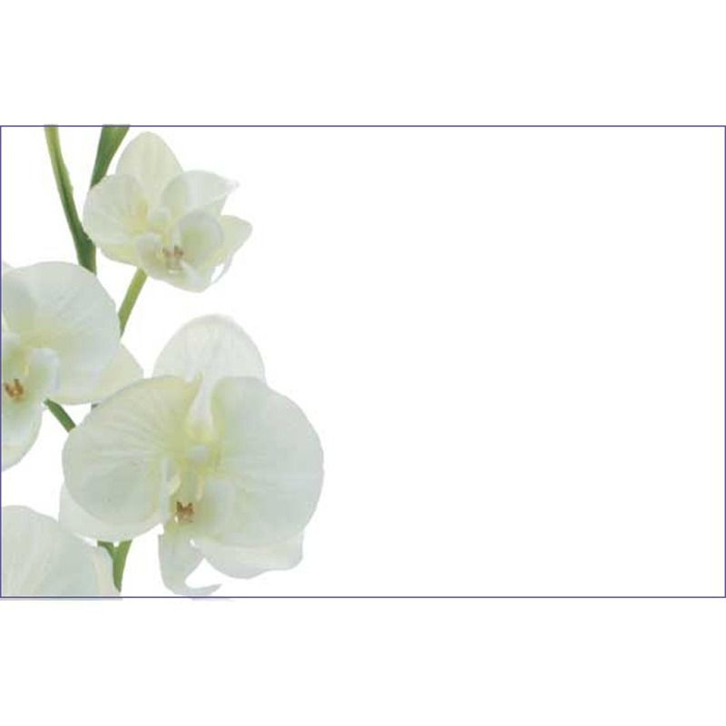 Cards: White Flower (No Message) (x50)