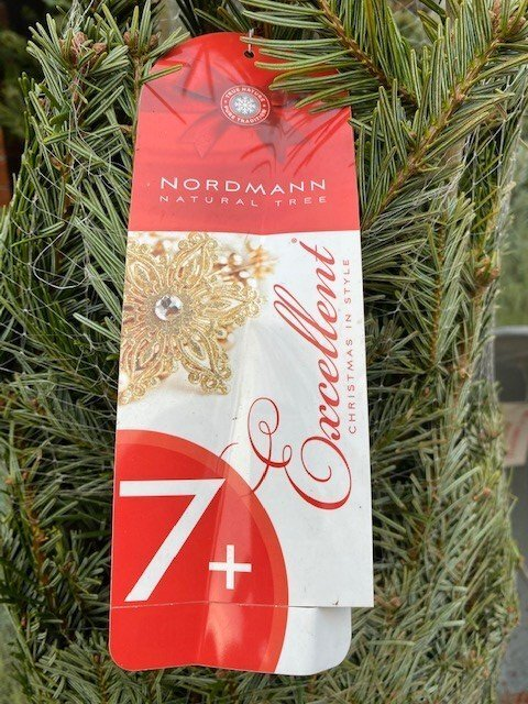 NORDMANN FIR EXCELLENT (Red 7)