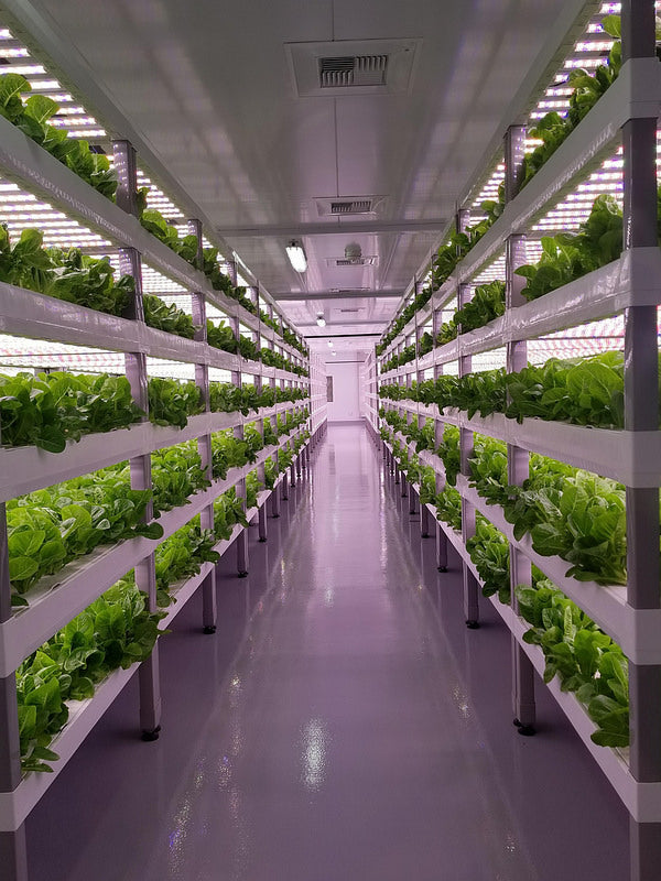 140$ MILLION INVESTED INTO VERTICAL FARMING VENTURES