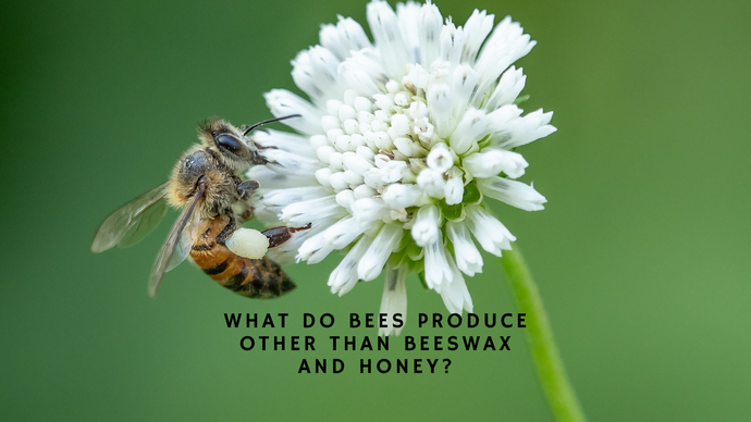 WHAT DO BEES PRODUCE OTHER THAN BEESWAX AND HONEY?